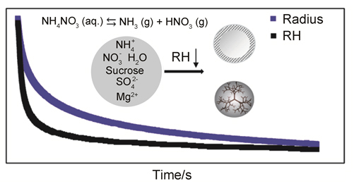 Volatility of Ammonium Nitrate in Ultra-viscous Aerosol Droplets by Optical Tweezers