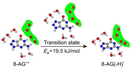 理论研究8-氮杂鸟嘌呤自由基阳离子脱质子反应