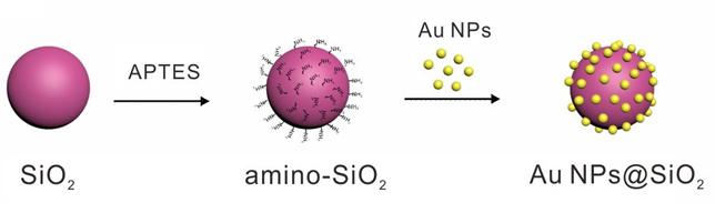 SiO<sub>2</sub>介导的5 nm金颗粒的高效富集及其催化活性研究