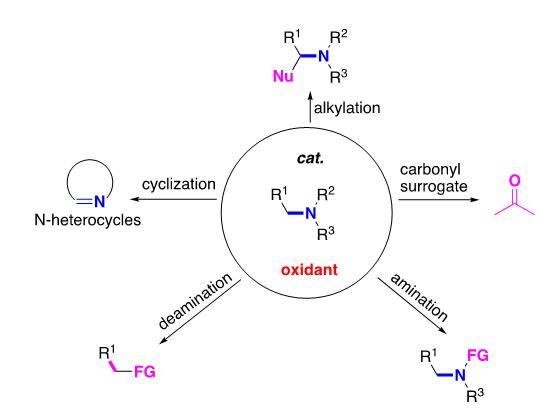 <i>N-</i>烷基胺类作为多功能砌块在氧化偶联反应中的应用